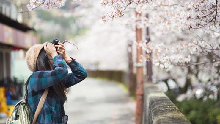 spot-terbaik-melihat-sakura