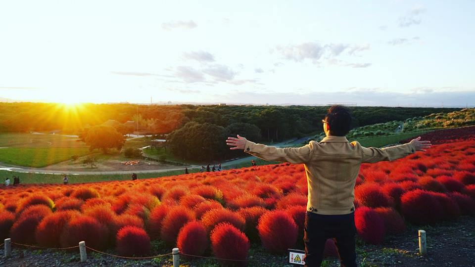 kochia festival hitachi seaside park