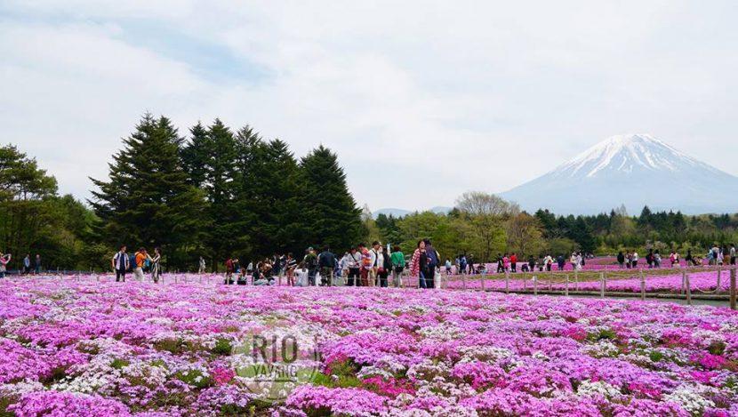 wisata taman bunga terbaik musim panas di Hokkaido Jepang